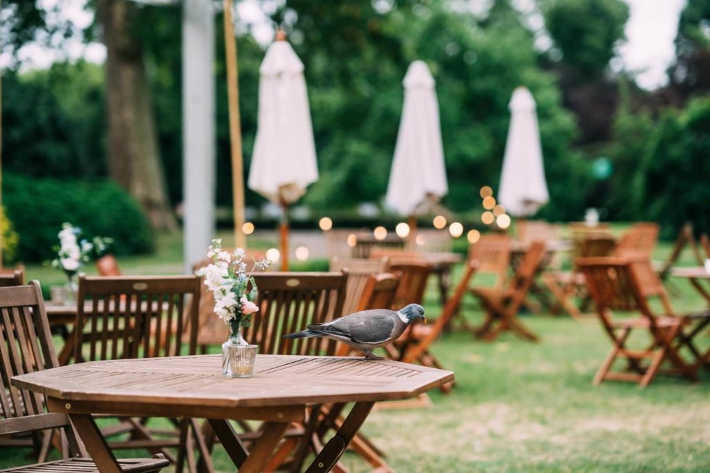 Outdoor garden furniture with pigeon